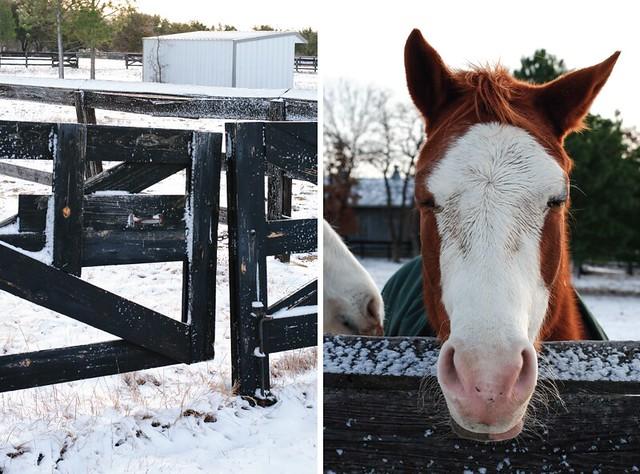 fencehorse2