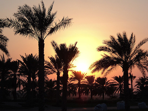 abudhabi sunset airport emirates unitedarabemirates sascha grabow getty saschagrabowcom trees tree palm palms desert middleeast mittlererosten sonne sun sonnenuntergang gettimagesartist idyll nature peaceful natur capitaloftheemirates moyenorient plantage plantation planta plantacion puestadelsol atardecer ocaso सूर्यास्त 日落 阿布扎比 अबुधाबी orange yellow sand dust brown sundown hazy plant palmtree outdoor sky landscape field