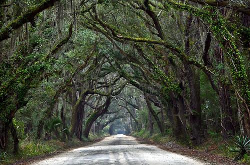 road trees usa oak unitedstates perspective southcarolina plantation spanishmoss botanybay gree edistoisland liveoaks botanybat jeffrosephotography jekawordlphotography