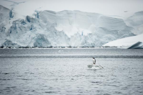 RYALE_Antarctica_Penguins-24