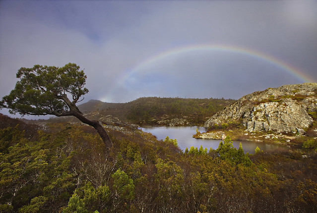 lake, woods, rainbow
