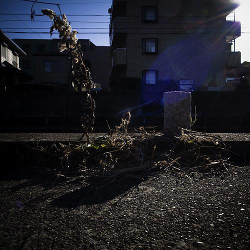 Canal Side Weed Glow, Urayasu