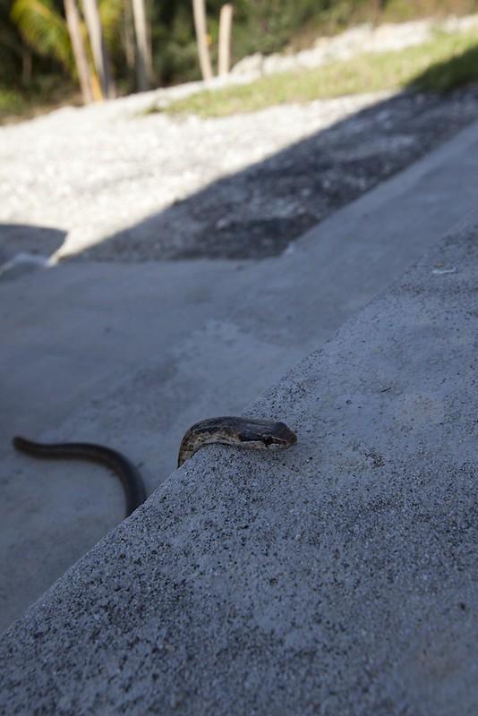 snake climbing steps