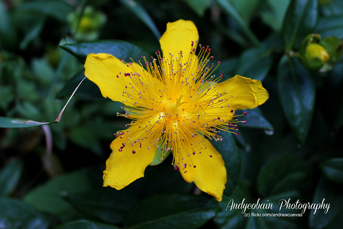 Yellow and the pink freakles by andycobain photography