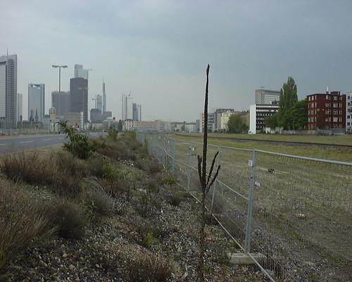 Seltsame Vegetation am Strassenrand im Europaviertel. April 2002