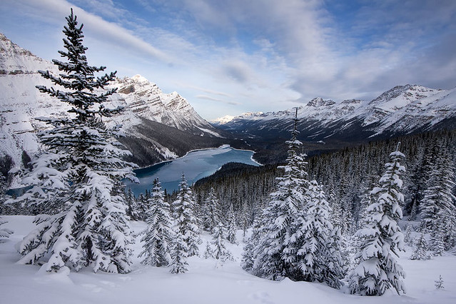 Peyto Winter