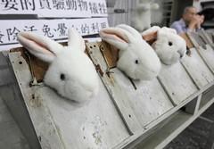 實驗動物至今仍未有相關的管理辦法。(攝影:楊萬雲)