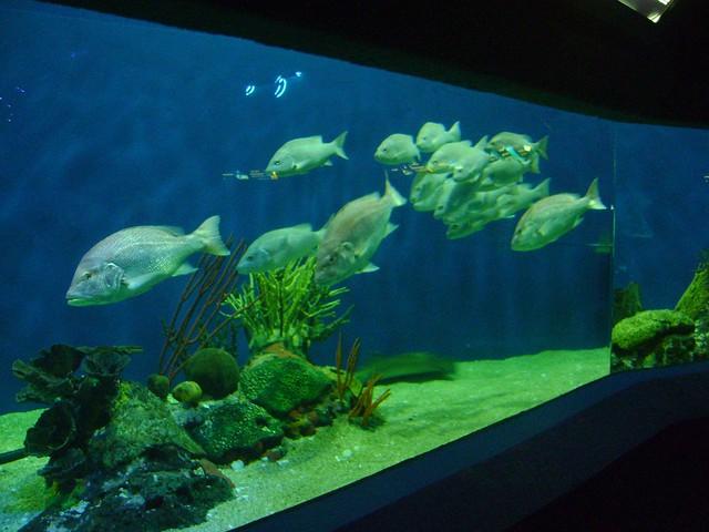 Acuario de Veracruz : Acuario de Veracruz - Diciembre 2012 039 Flickr - Photo Sharing!