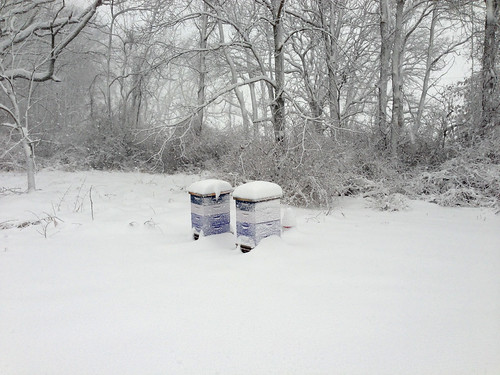 Snow-covered beehives