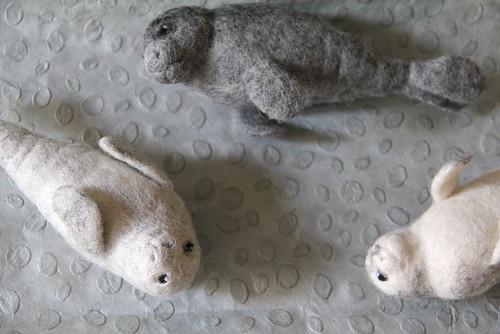 focas de fieltro