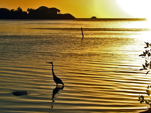 sunset sky heron gulfofmexico water silhouette gold golden florida fl egret fishcamp stilthouse portrichey pascocounty