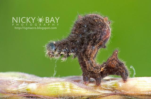 Caterpillar - DSC_3631