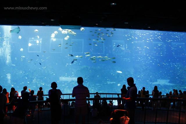 RWS S.E.A Aquarium 582