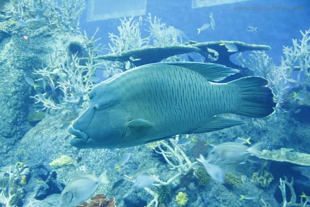 RWS S.E.A Aquarium 622