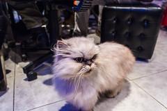 This cat is amazing isn't it?