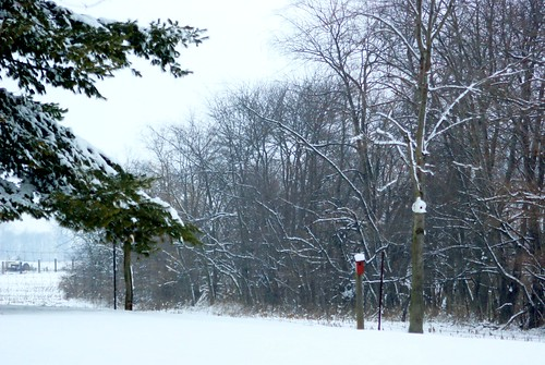 trees winter ohio snow cold nature weather december sony alpha 2012 a230 fairfieldcounty ruralohio stoutsville ohiofoothills