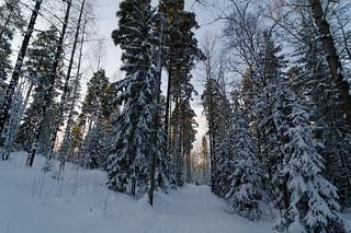 Image of Malminkartano Hill. winter forest hill talvi metsä malminkartano kukkula
