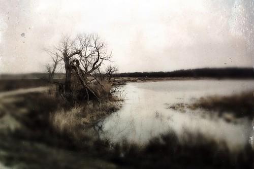 tree landscapes northtexas hagermannationalwildliferefuge uploaded:by=flickrmobile flickriosapp:filter=nofilter