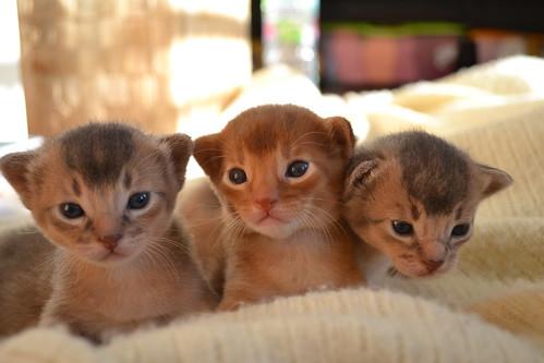 Artus, Alf und Anton