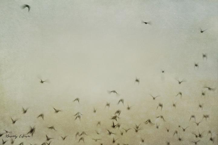 soaring II