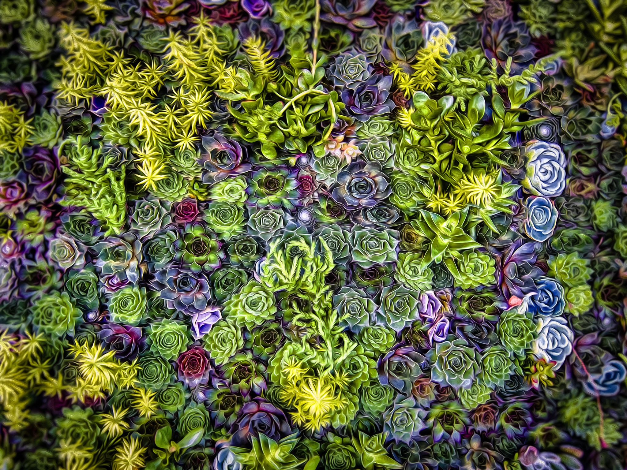 So Succulent - Menlo Park - 2010