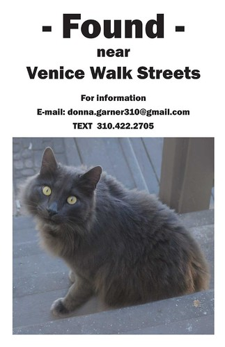 Found Cat Venice Beach!