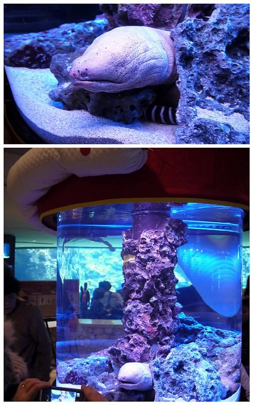 Okinawa Japan Churaumi Aquarium Day 3 A Xuan 39 S