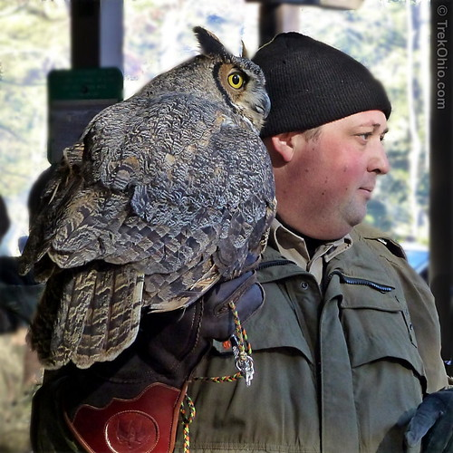 Naturalist and Great Horned Owl