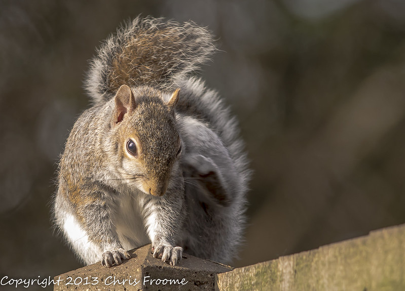 Squirrel with an itch
