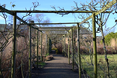 pruned roses pergola in winter at Cambo estate