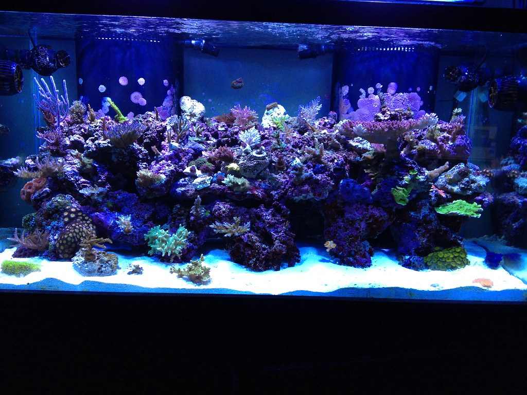 Reef Central