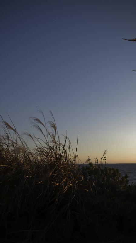 Seaside Grass Afterglow
