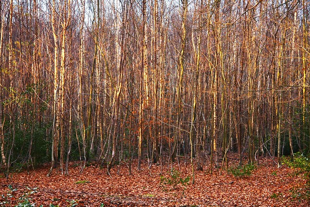 the symbolism of the birches Symbolism takes a great part in ¡§birches¡, because it gives the poem a deeper level of meaning heaven and ground symbolize people¡s dreams and reality frost uses birch trees and branches as the symbol of human beings and different paths of lives.