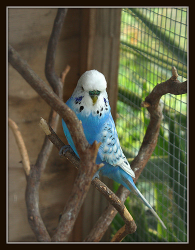 Aviary Portrait
