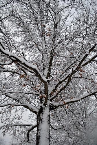 snow day 2012 028