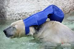 Christmas Eve with Polar Bear Yoghi