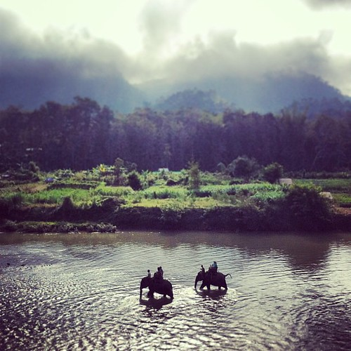 The Mahout Experience today: riding, swimming and learning how to control #elephants #namafia #laos