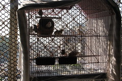 Marziya Shakirs Birdcage of Finches by firoze shakir photographerno1