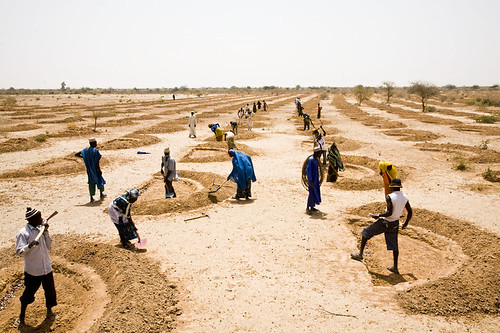 Cash-for-work and disaster risk reduction in Niger