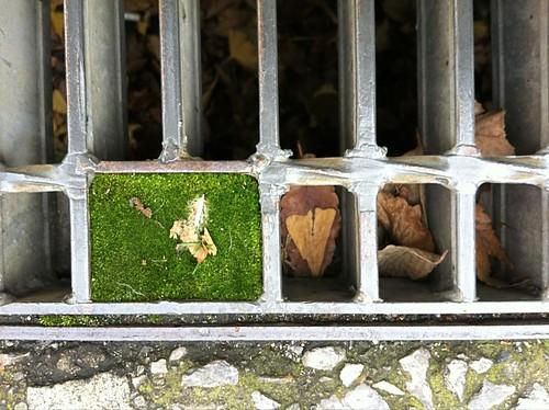 2012-12-31新宿西向天神社小さな苔庭