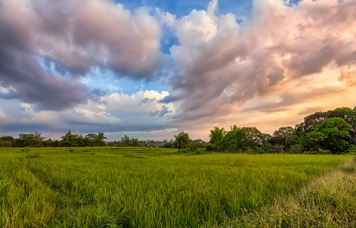 trees sunset summer cloud tree beautiful field clouds canon colorful day rice cloudy farm philippines ricefield cavite province naic 550d calabarzon canon550d kissx4 dheej18 djvillanueva