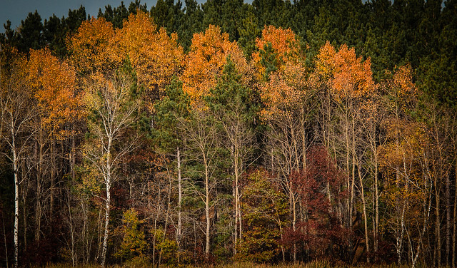 Minnesota Fall Color