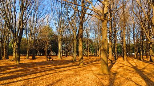 Yoyogi Park in the Morning