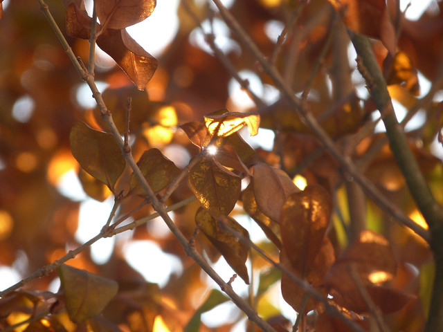 lightleaves