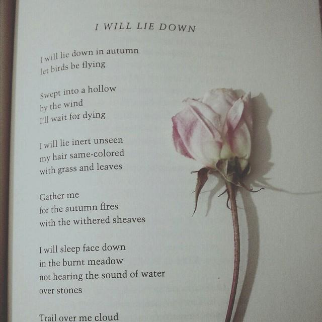 petals unfurling