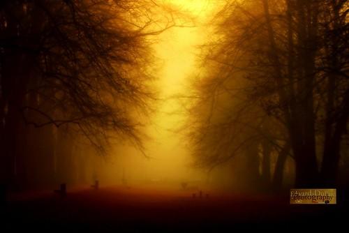 trees kilkenny ireland light mist nature fog landscape licht atmosphere eire emeraldisle irlanda leinster bestcapturesaoi edwarddullardphotographykilkennycityireland 9deanstreetkilkenny