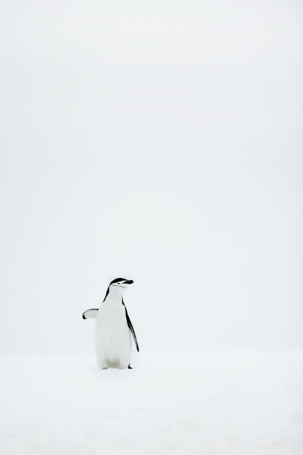 RYALE_Antarctica_Penguins-33
