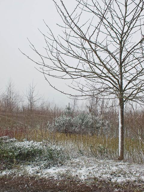 Gentle Snow Scene