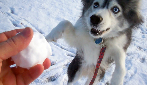 Fetch with a snowball