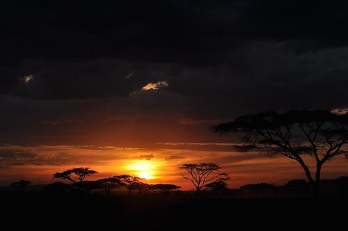 sunset nature tanzania unescoworldheritagesite safari eastafrica photomix acaciatrees seronera naturalwonderoftheworld theserengeti rememberthatmomentlevel1 flickrsfinestimages1 flickrsfinestimages2 bestevercompetitiongroup